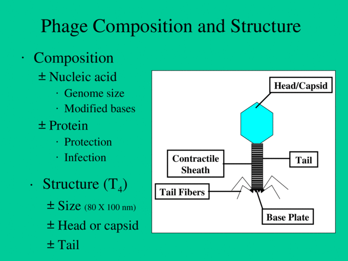 PPT - Microbial Genetics PowerPoint Presentation, free