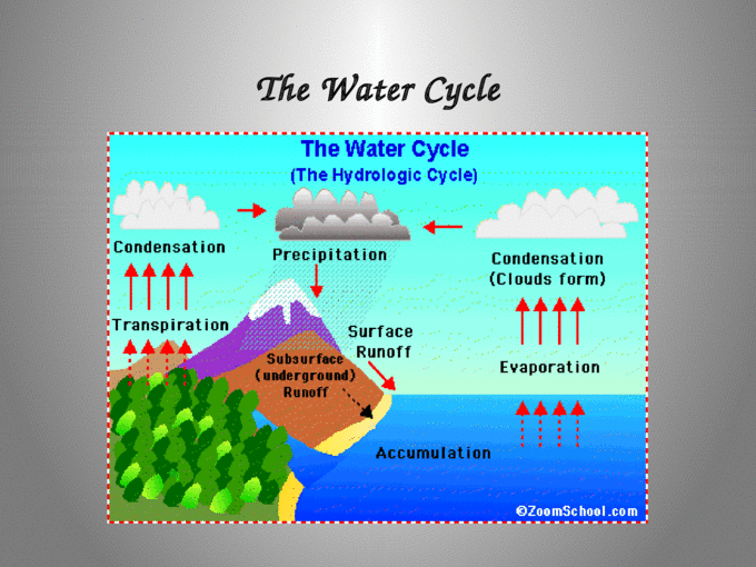 ENERGY FLOW AND MATTER CYCLES CHAPTER 3. What do you think ...